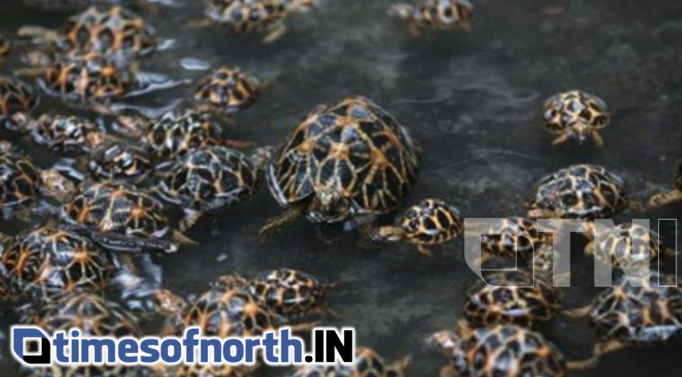 HUNDREDS OF TORTOISE DIE IN MAYURAKSHI RIVER SOON AFTER RELEASE