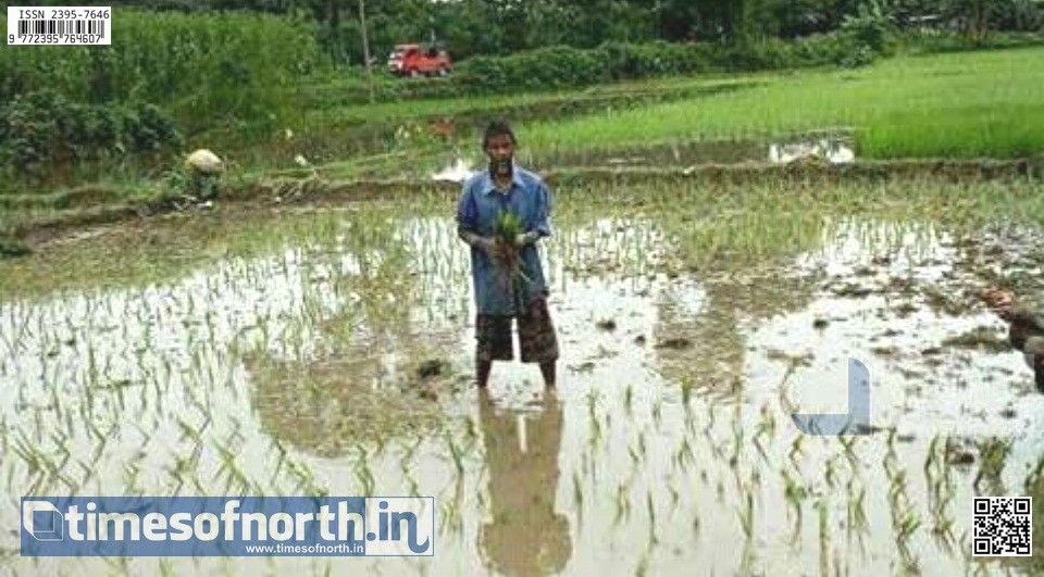Kharif Crops in Downward Production, Due to Uneven Monsoon This Season in North Bengal